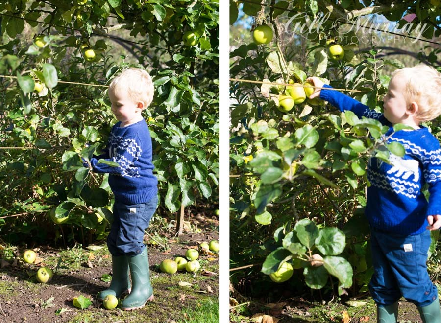 Learning about Autumn apple picking