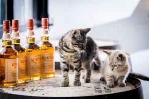 Glenturret Distillery's Purr-fect Mousers!