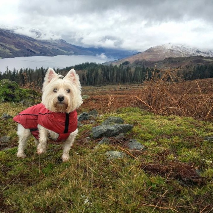 Casper in St. Fillans overlooking Loch Earn @Bean_Nighe