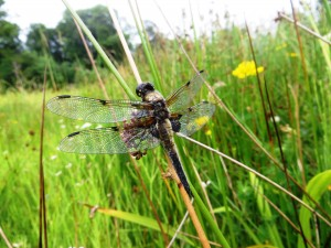 A Perthshire Wildlife Snapshot