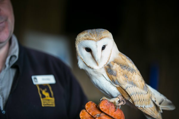 Highland Safaris Barn Owl