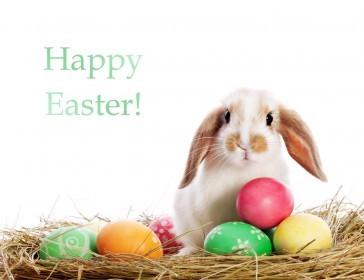 Glendoick Easter