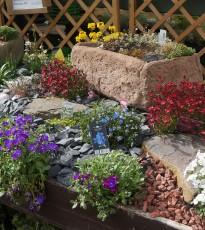 Alpine Plants