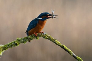 Outdoor Adventures Nature Nuts Kingfisher