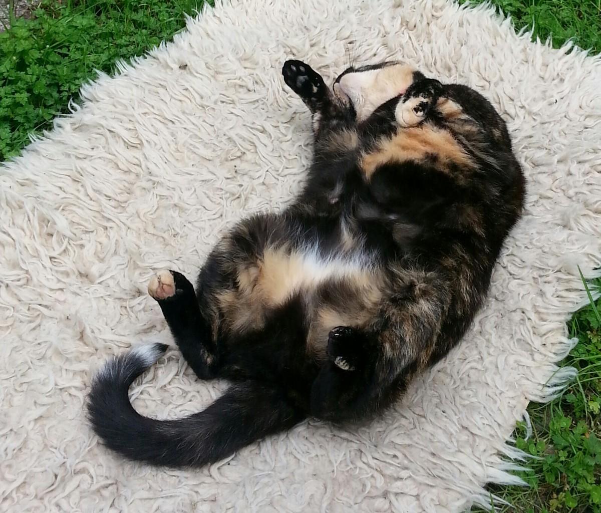 EVA CHRISTIE - Cat
