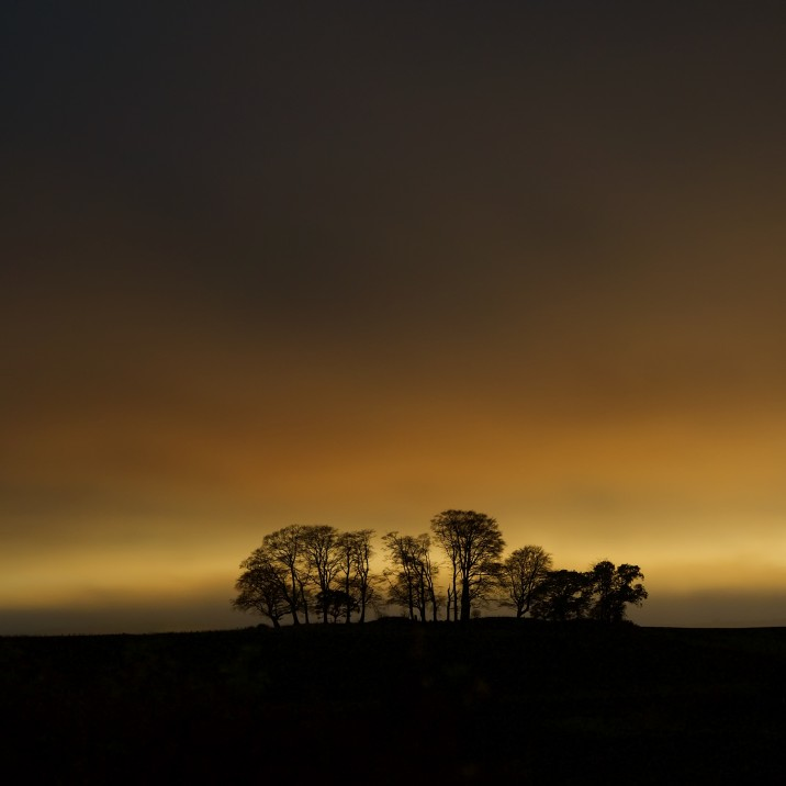 This beautiful image from Tom Ryan shows the trees in Scone in front of a gold glowing sky.