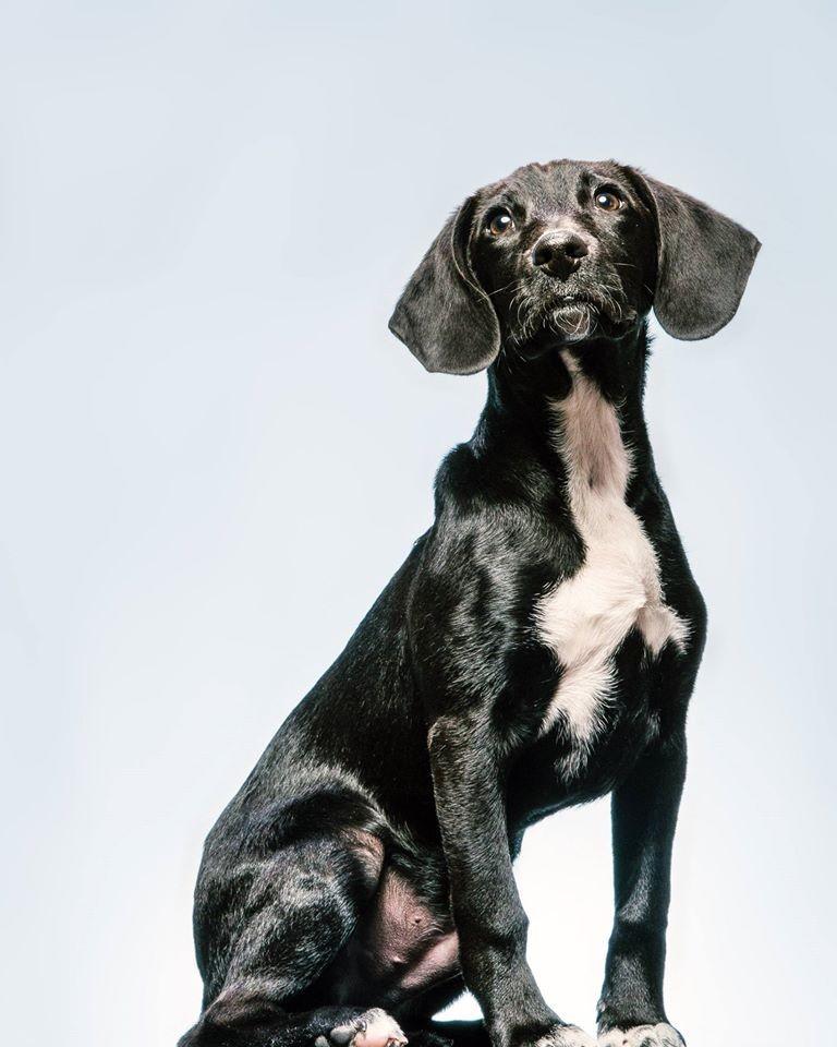 Gifts Under 50 Craig Stephen dog