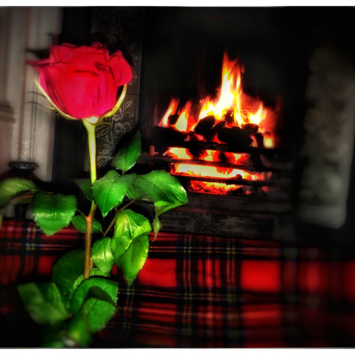 Derek Browning sent us this stunning image for Rabbie Burn's Famous poem ' A Red, Red Rose'