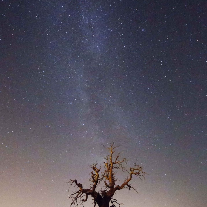 The Milky Way beaming down on a twisted tree in Brig.
