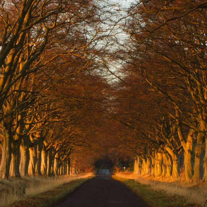 Sormontfield road lined with trees making a canopy and casting a warm orange glow - STUNNING!