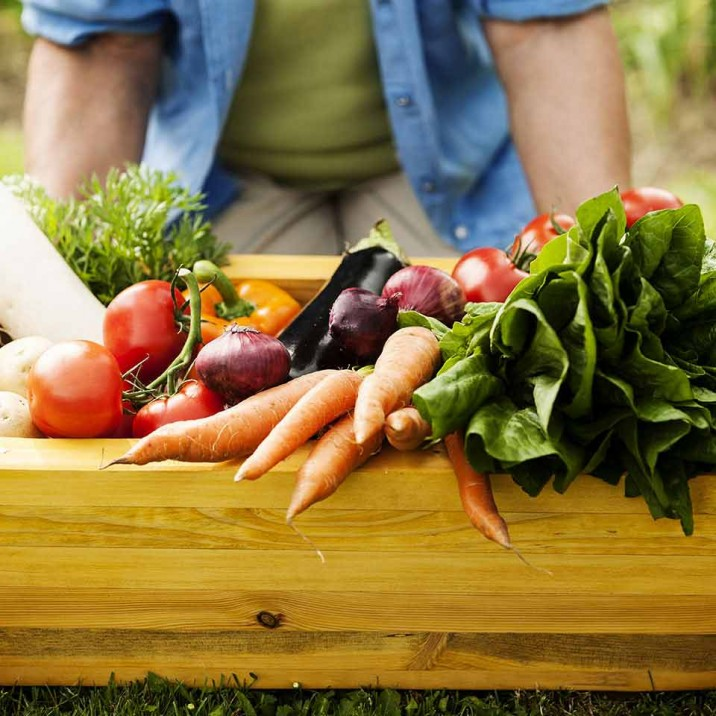 Growing Fruit and Vegetables in Scotland advice from plant expert Ken Cox at Glendoick Garden Centre.