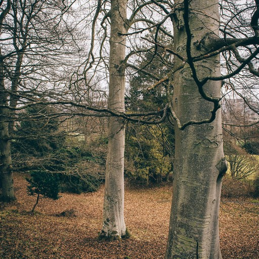 Trees in woodland area.