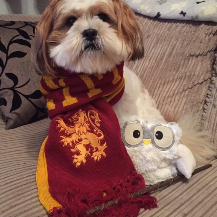 Our favourite pooch Baxter had to get in on the world book day action and donned his harry potter scarf!