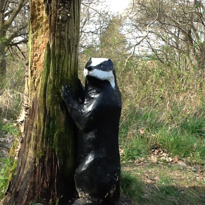 A wooden badger hugging a tree!