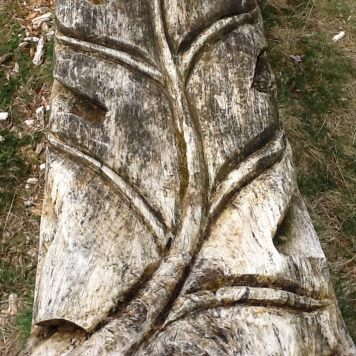A leaf carved into a fell down tree