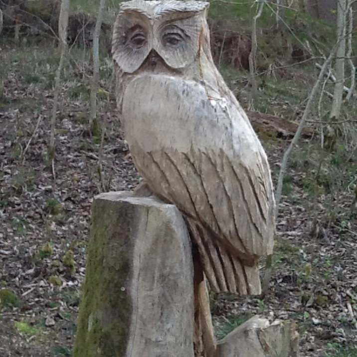 A nice owl sitting down on a tree stump