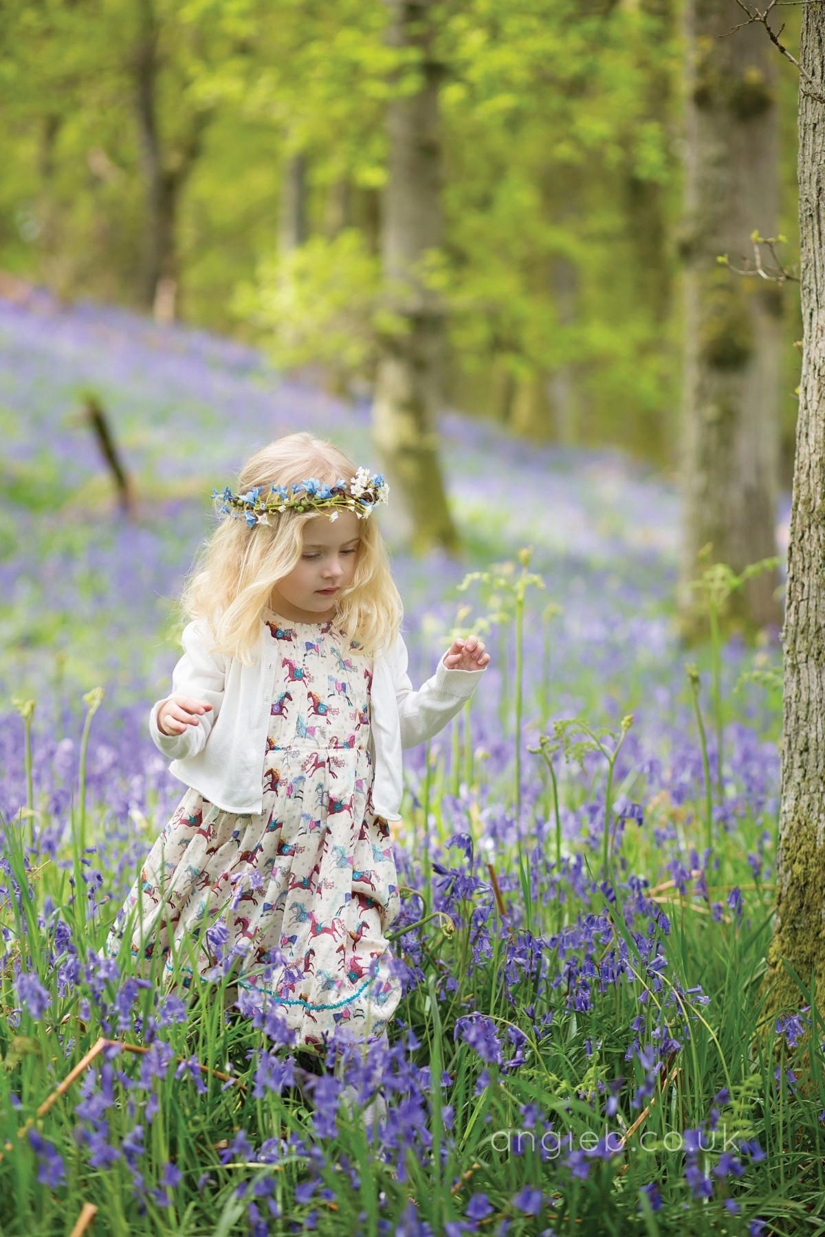 Taking a stroll through the field of bluebells!