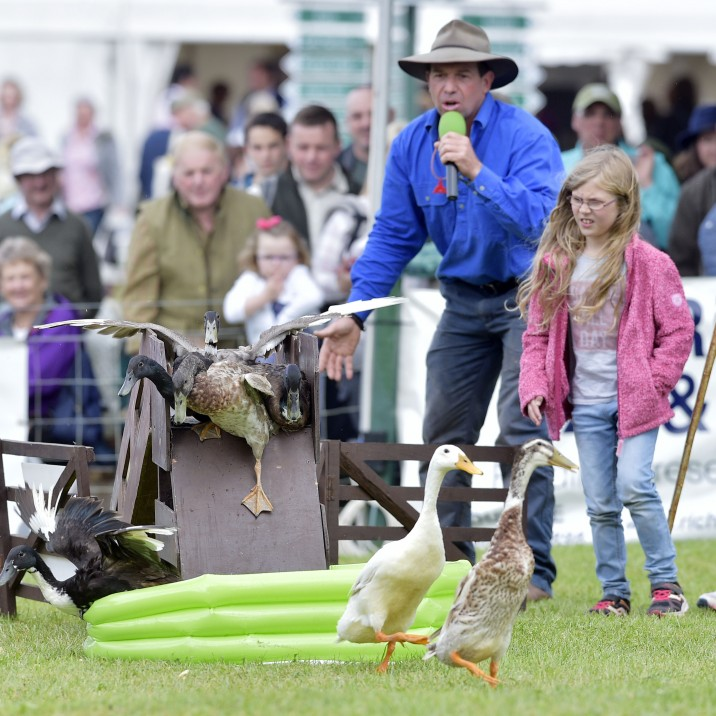Ducks on Parade at Scottish Game Fair