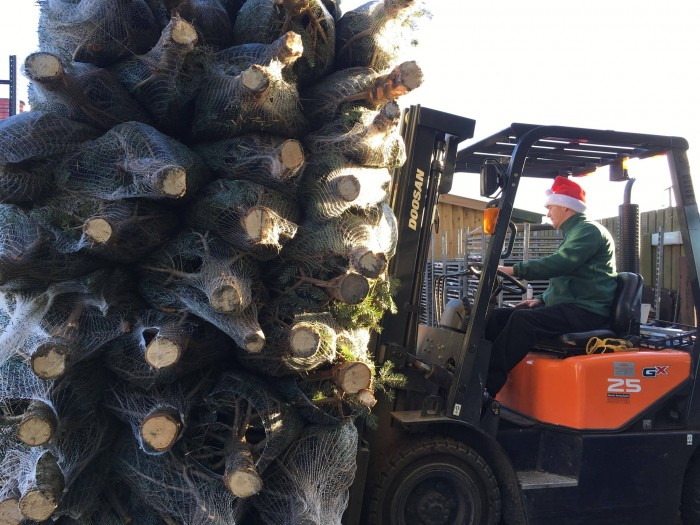 Glendoick Christmas trees arriving