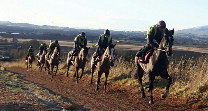 Lucinda Russell - Lucinda's pic of the horses