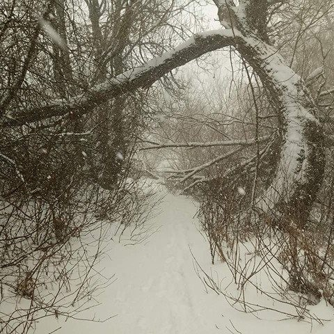 Snow covered branches at Woody Island