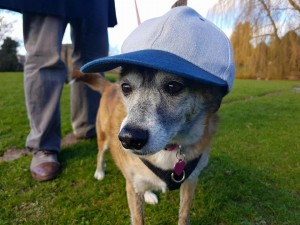 Small City dog Millie has a big day out in Perthshire with a little help from the Dog Friendly Perthshire group.