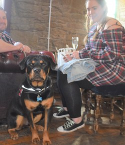 Pups in the Pub