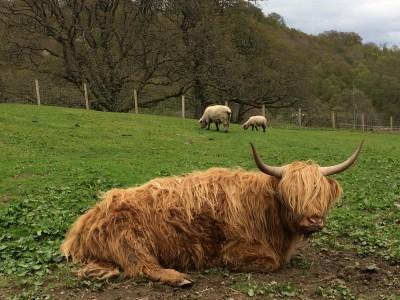 Auchingarrich Wildlife Centre Review