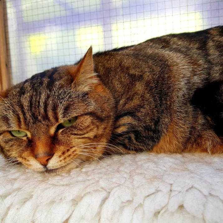 Friendly Gracie is a mature, loving cat looking for a home. Because she is an elderly lady, Cats Protection will meet the cost of any future vets bills.