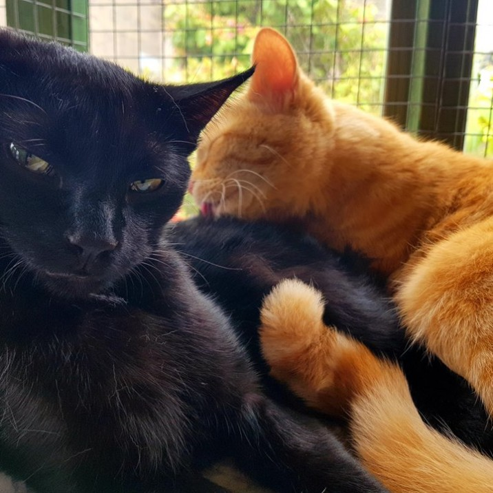 Pumpkin and Treacle are a closely bonded brother-and-sister pair as you can see by this cute pic!