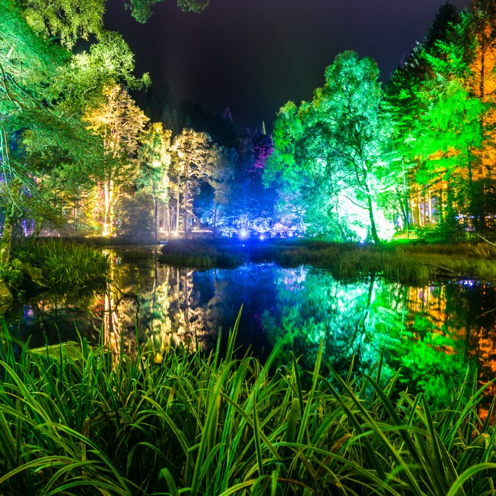 The Enchanted Forest returns for its 17th year in October and tickets go on sale from tomorrow morning.
