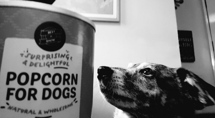 Pooches Review- Doggy Popcorn