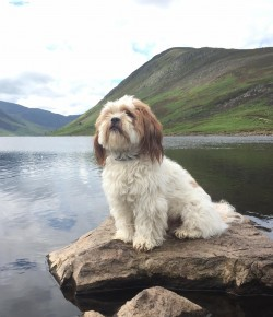 Pet Services in Perthshire