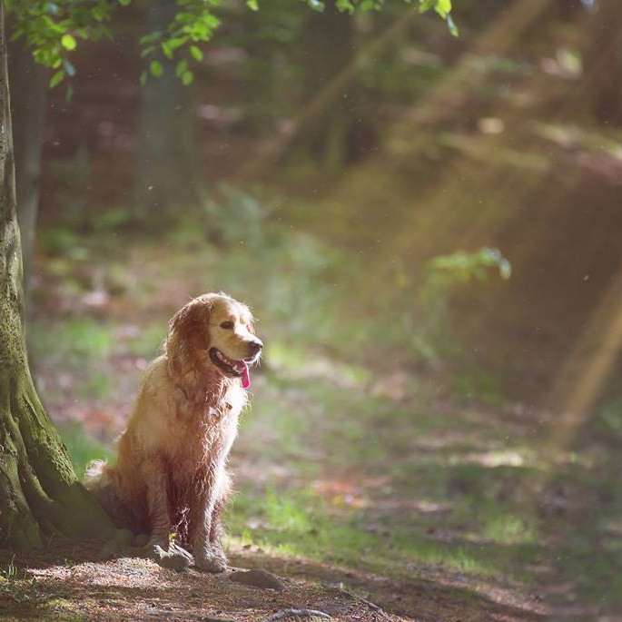 Deuchny Woods, my favourite place in Perth, this is the wonderful Monty