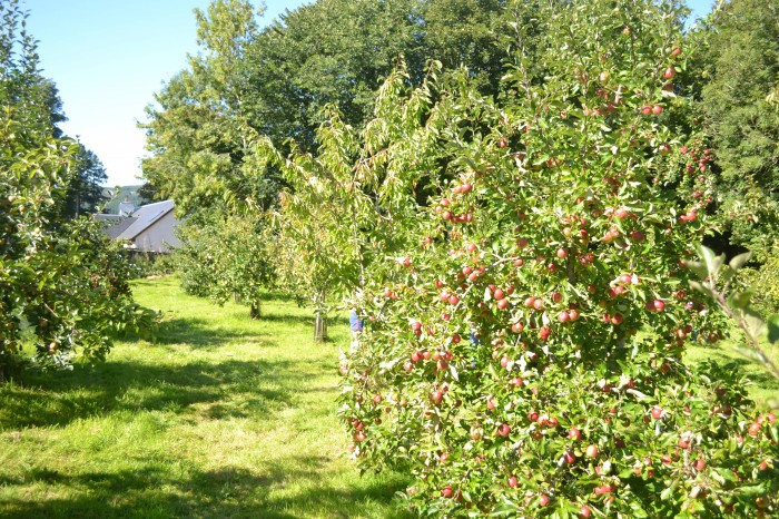 Dunkeld and Birnam Community Orchard