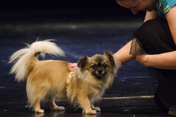 Barney - one of the two canine actors playing Toto