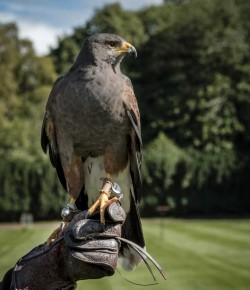 Birds of prey are bound to enrapture