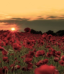 Remembering the War in Song