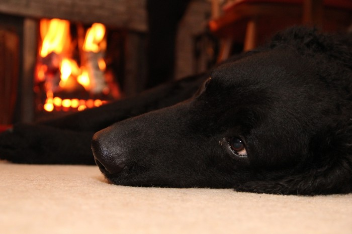 A black labarador lays on a carpet next to a fireplace