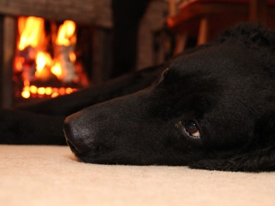 Top 10 tips to keep your pets safe this bonfire night