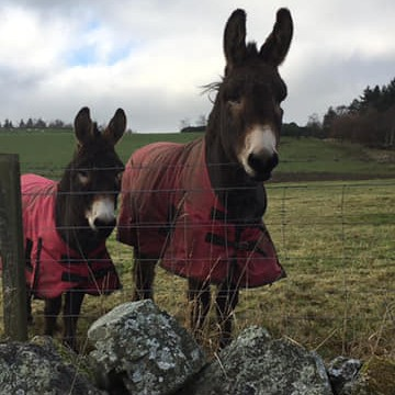 Helen Mcleish spotted these gorgeous Donkeys out on a wintery walk and thought they would be perfect for our Winter gallery looking cosy in their coats.