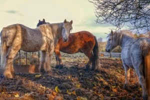 Winter is coming to rural Perthshire