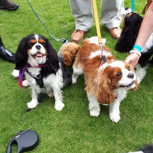 Avril sent in this picture of her super cute King Charles Spaniels.  They look like they had a great time! ❤