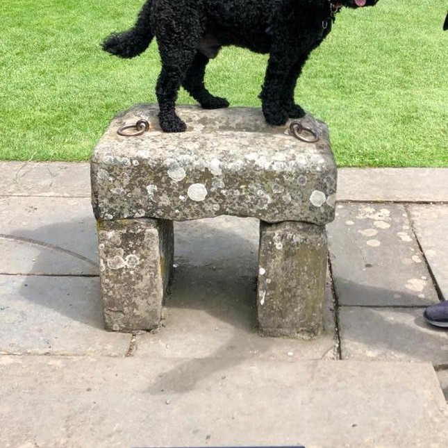 Lorraine took this pic of her cheeky Cockapoo awaiting his crown on the Stone of Destiny! #KingCockapoo 👑