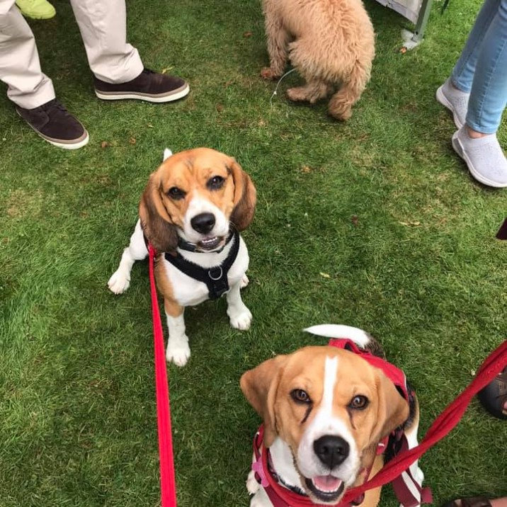 Lisa sent us this pic of her happy smiley and oh so cute Beagles! 🥰