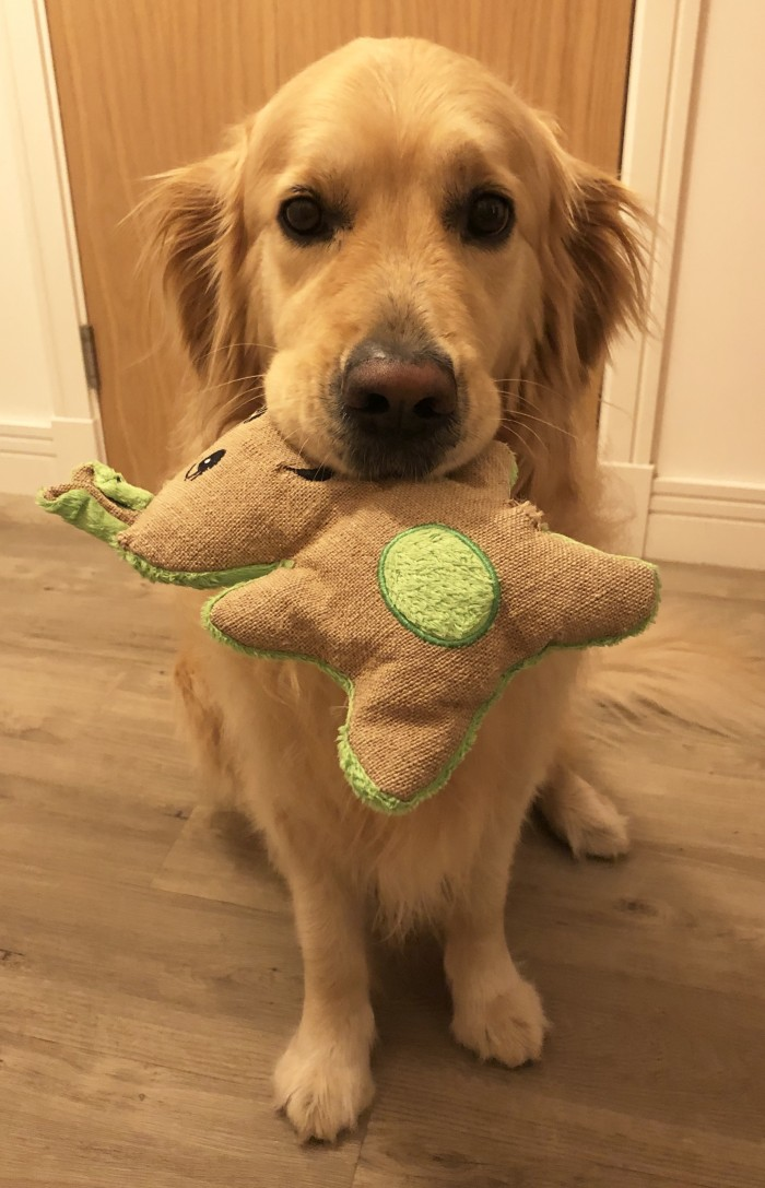 Give natural dog toys a try!